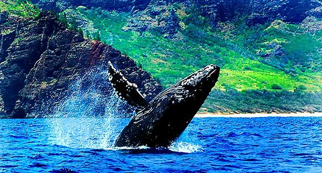 IMG-20170909-Whale